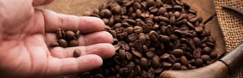 Робуста – кофе, заслуживающий внимание